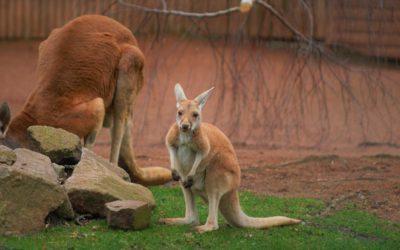 Zoo v  Drážďanech: spatřete pozoruhodná zvířata na vlastní oči